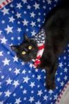 Patriotic Onyx