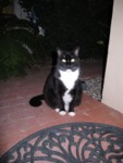 Friendly neighborhood kitty has attended movie night on his own..if he comes back, I'll name him Cinema. :)