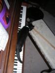 Ebony plays the VISIBLE piano! ;)