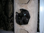 Both kitties can still fit into one cubby, but just barely because Onyx is so big!
