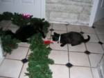 The kitty Christmas collars were stolen off the table & became toys!