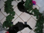 Playing in the garland that will hang on the walls...