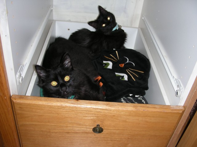 I had pulled out the kitchen drawer above to reorganize my plasticware, and the next time I looked, there were both kitties curled up on my extra towels, including the black cat potholders!