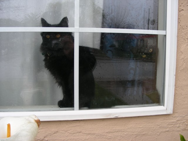 The windowsill isn't very wide, so Ebony couldn't get past Onyx very well...heehee...
