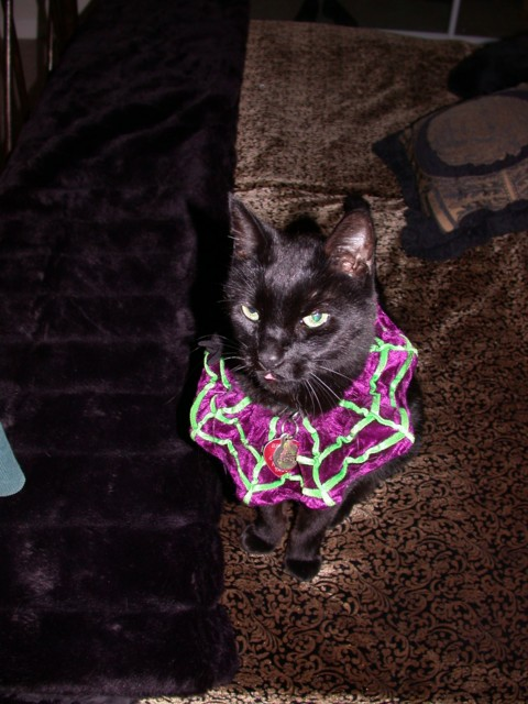 Kylie the Kitty in Kostume!