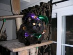 Highlight for Album: Mardi Gras Party Prep
