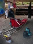 sled dog equipment
