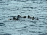 Sea otters posed so nicely for us!