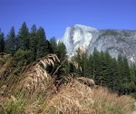 Artistic Halfdome with Grass