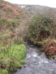 Thu Dec 30 05:54:59 2004 Lovely babbling brook