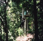Lisa on the canopy tour in Costa Rica