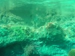Finding Nemo Submarine ride