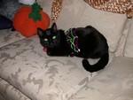 Halloween 2005 - The latest fashion rage - Velvet Spider Tutu!