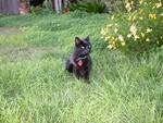 Kylie in the garden at Brittahytta