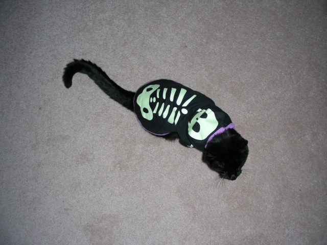 Oct 13th 2007 - New Halloween costume for 2007 - it glows in the dark!