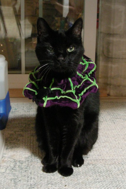 Everyday easy to wear Halloween costume that Kylie actually liked to wear since it worked as an extra pillow. This is the last good photo of Kylie, Oct 20th, 2007. Nine days later she went to her eternal rest after 11 1/2 great years with me. I miss you, Kylie.