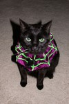 Halloween 2004 - How could you make me wear this?!?