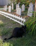 Halloween 2003 - Perfect Halloween Accessory Eating Grass in the Graveyard
