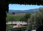 The view from the main steps at Miner Family Winery