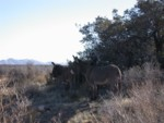 These wild burros are seldom seen so close to any roads!